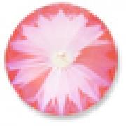 Swarovski Elements Stein Rivoli 14mm Ultra Pink Coral AB beschichtet 6 Stück